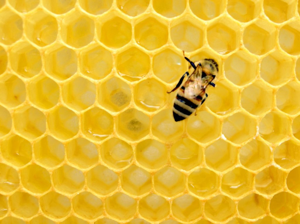 Your company values are the foundation of your company culture.  Bee your values.