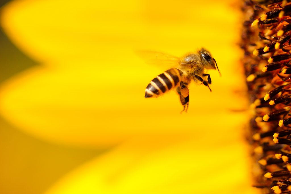 Bee the Company Culture